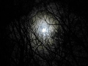 Darkness-forest-night-image