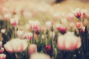 29089-Blossoming-Daisy-Garden