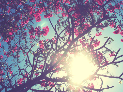 Flowers-tumblr-flowers-33623873-500-374