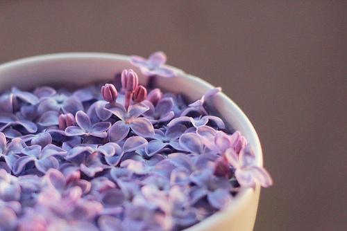 lilac_5