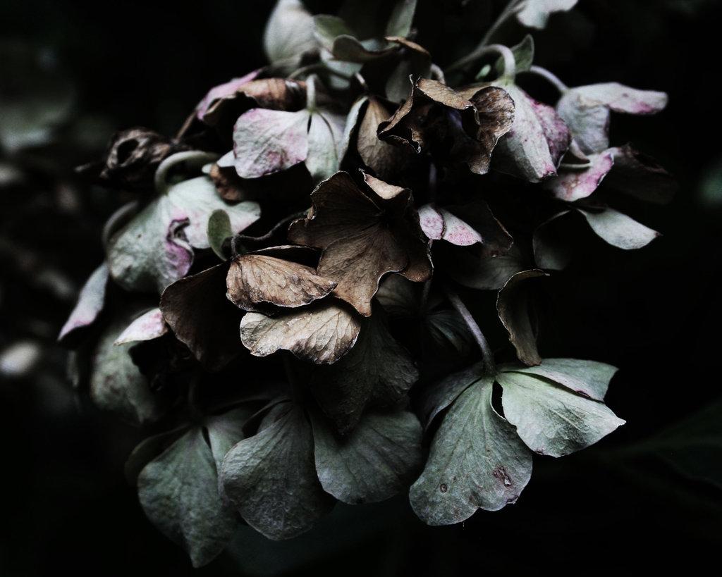 slowly_dying_by_elizabethtown60b-dagocm1