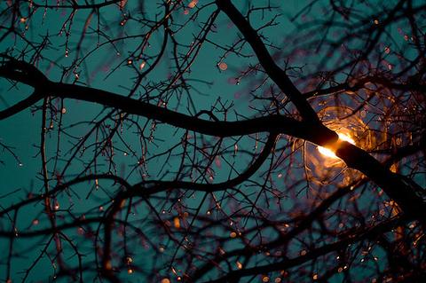 branches-light-nature-tree-Favim.com-255324