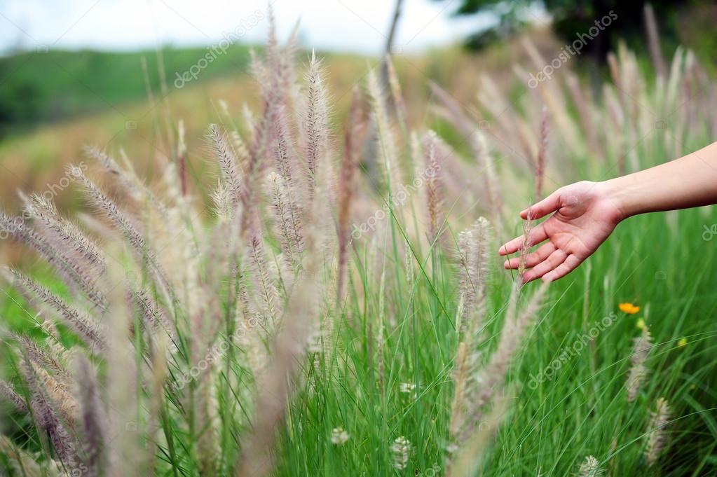 depositphotos_49578617-stock-photo-hand-touching-a-reed-grass
