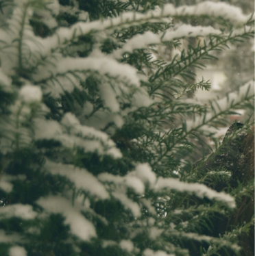 46167-Snow-Covered-Tree