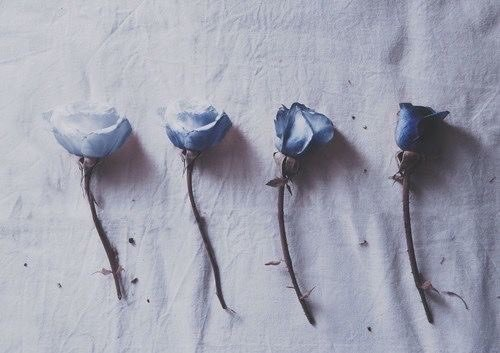 aesthetic-blue-flower-grunge-Favim.com-5022143