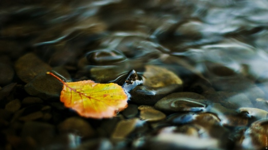 water_leaf_yellow_pebbles_transparent_stream_55775_1920x1080