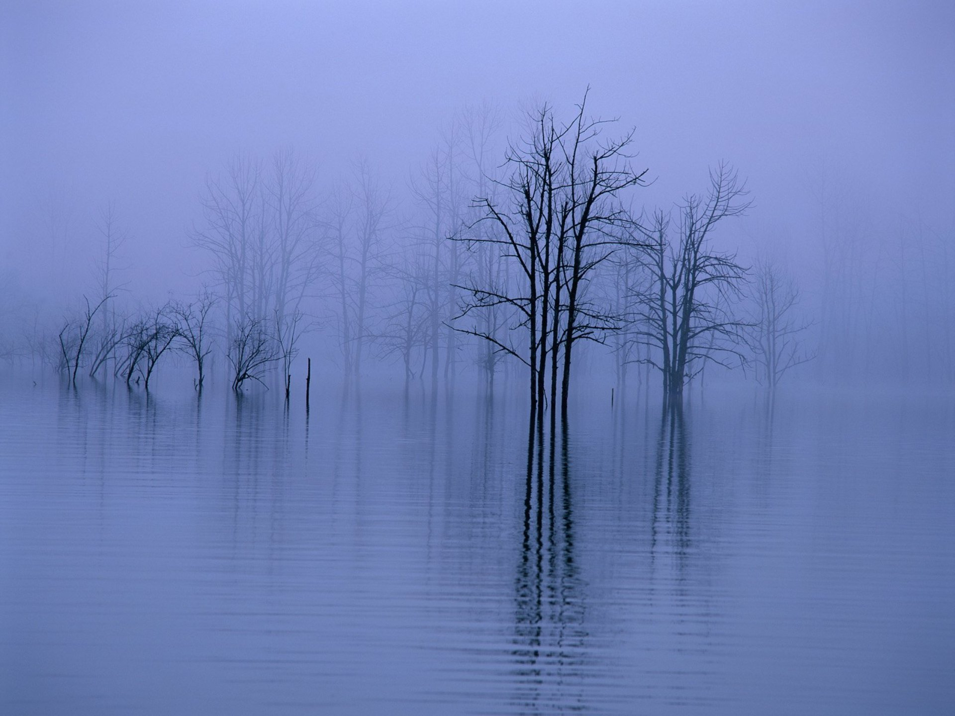 Fog,-water,-trees