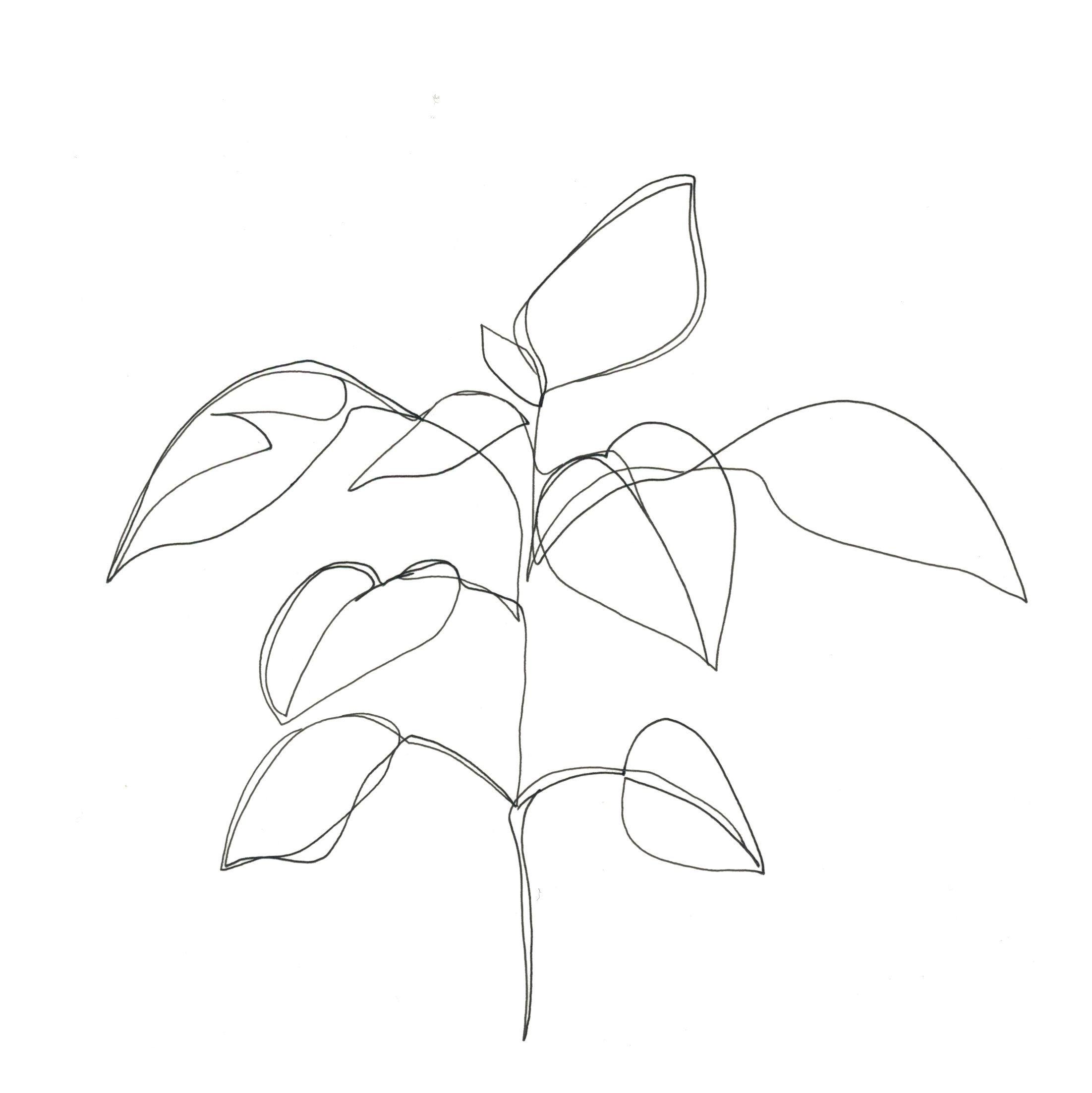 leaves-line-drawing-23