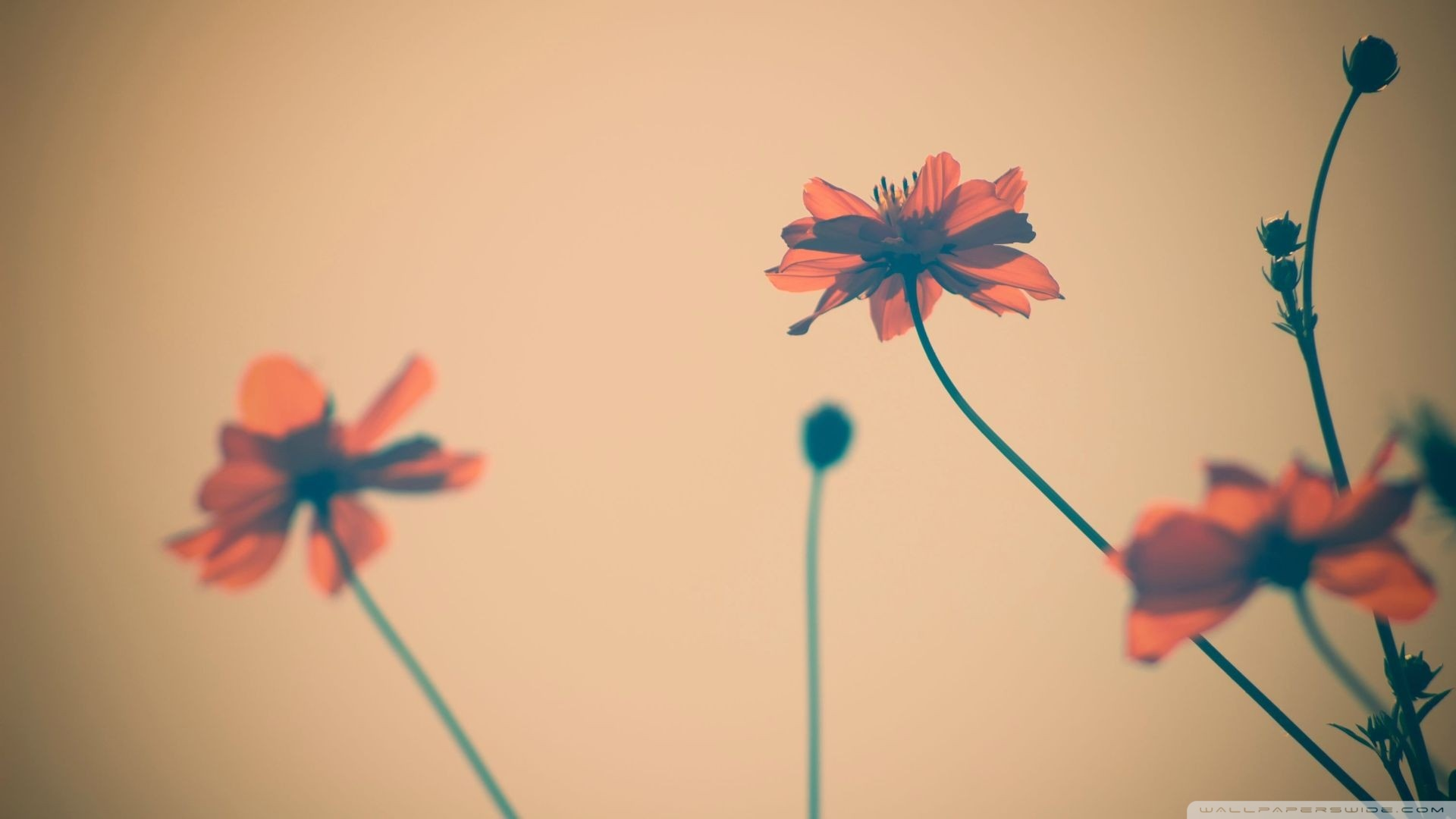 flower-tumblr-wallpaper7