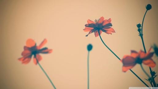 flower-tumblr-wallpaper7