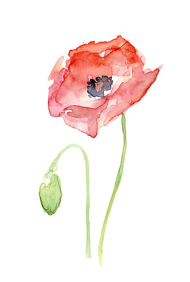 red-poppy-olga-shvartsur